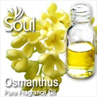 Fragrance Osmanthus - 50ml